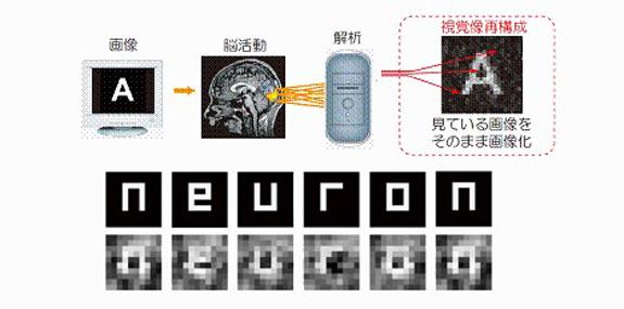 Lire une image à travers le cerveau humain